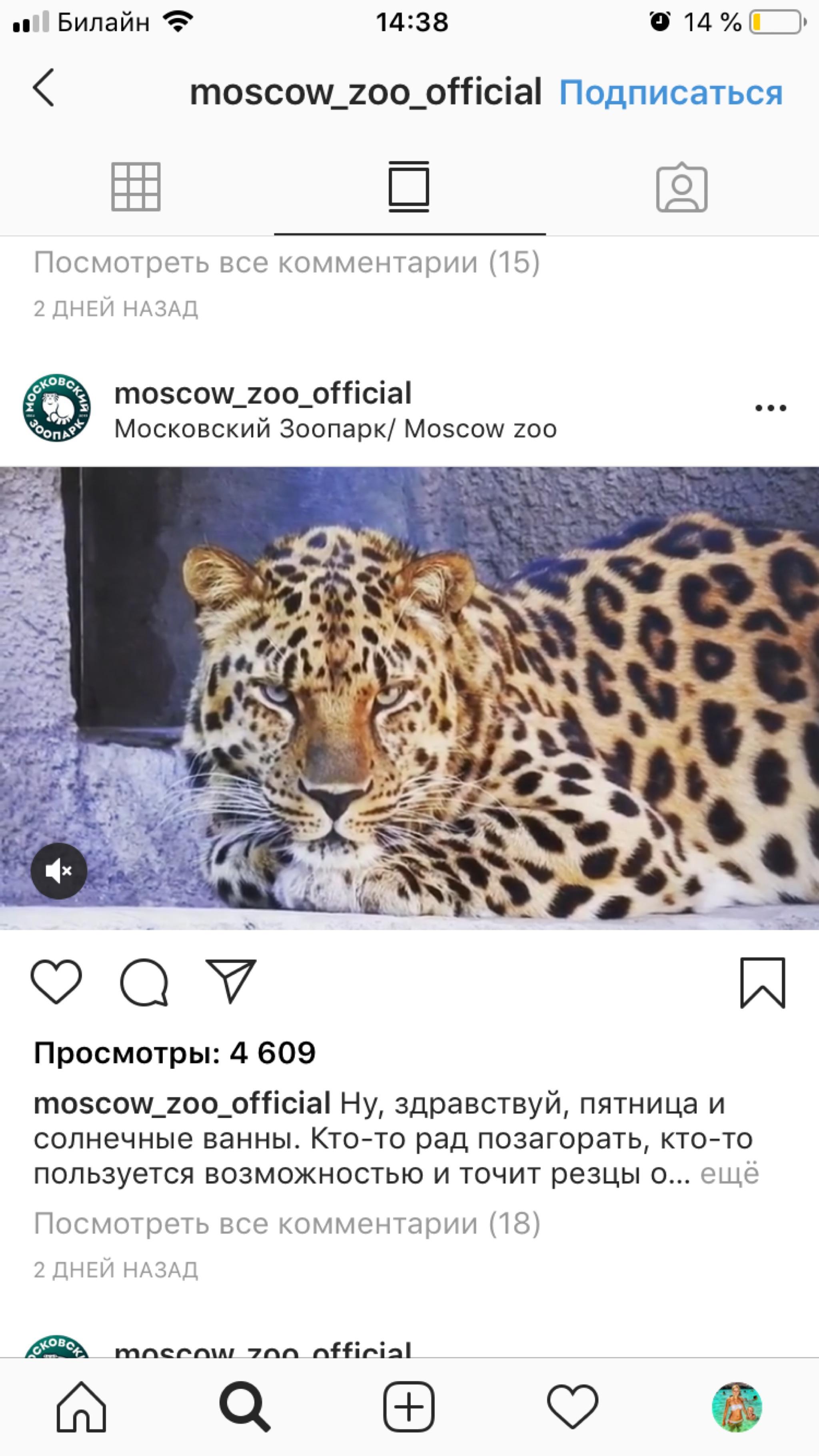 гив Instagram Moscow Zoo